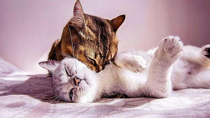 Chaleur chat