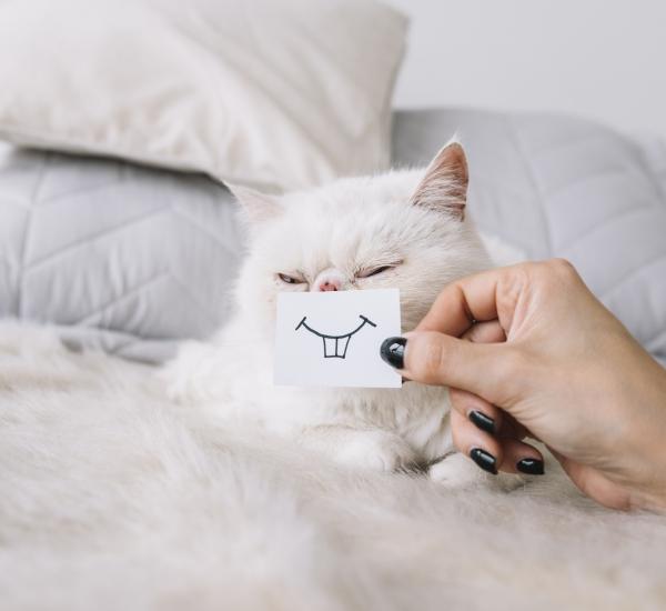 dentition-chat-dents-arboricat