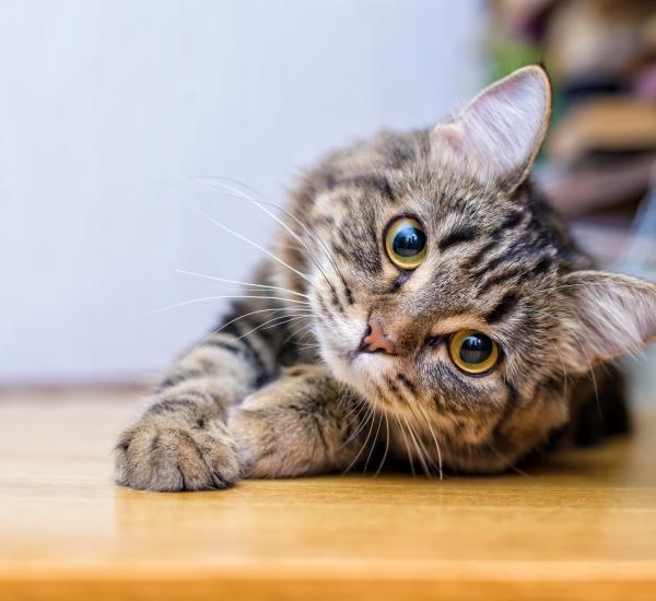 vision-chats-tout-savoir-arboricat